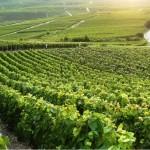 Paisaje región de la champagne